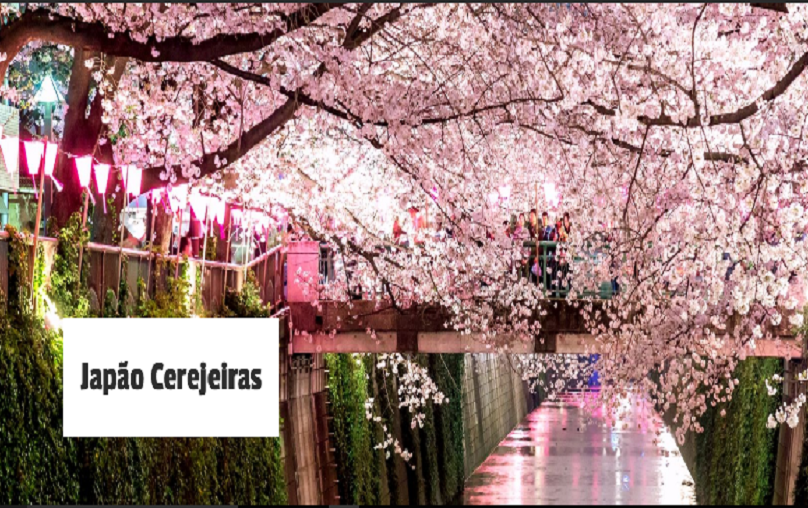 Japao Cerejeiras