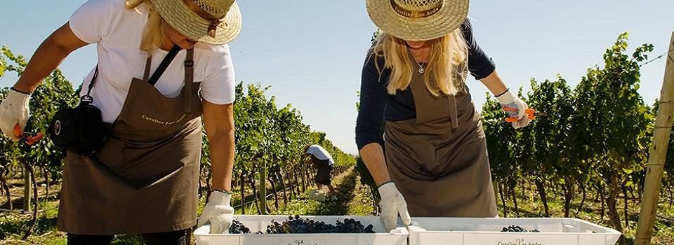 vinhos-e-oliveiras